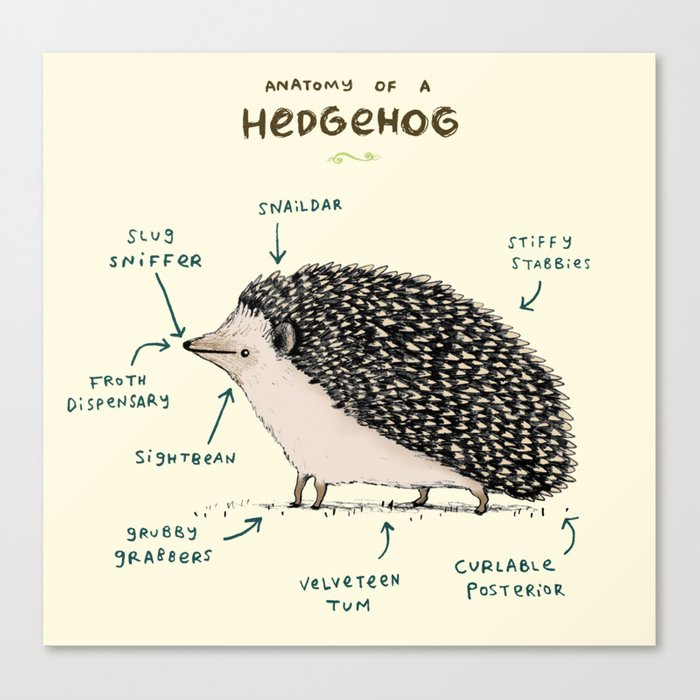 Anatomy of a Hedgehog Leinwanddruck