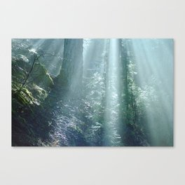 Misty Forest in Northern California Canvas Print