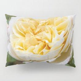 Old English rose Pillow Sham
