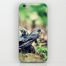 Slowpoke iPhone & iPod Skin