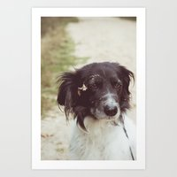 border collie Art Prints featuring Border Collie by Laura Baay