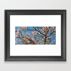 Spring 2013 01 Framed Art Print