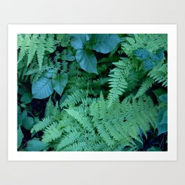 Ferns and Poison Ivy Art Print