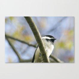 Chickadee 3 Canvas Print