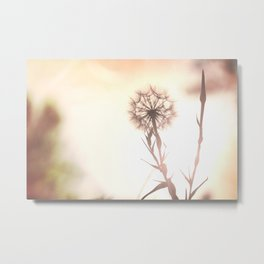 Pink Distant Dandelion Flower - Floral Nature Photography Art and Accessories Metal Print