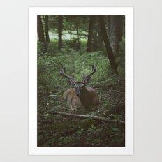 Buck in Velvet Art Print