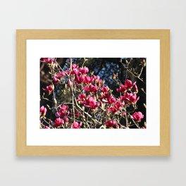 Beautiful tree Framed Art Print