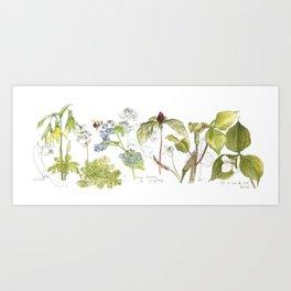 Spring Wildflowers Sketch Art Print