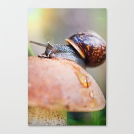 Macro world Canvas Print