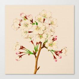 Yoshino Cherry Blossoms ~ Vintage Japan Art Canvas Print