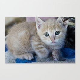 Red Kitten Canvas Print