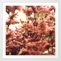 Cherry Blossoms 3 Art Print