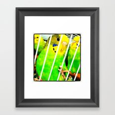 chirp chirp  Framed Art Print