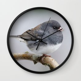 Fluffy Cassiar Dark-Eyed Junco on the Pear Tree Wall Clock