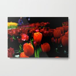 Fire Tulip Metal Print