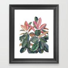 Rubber Plant Framed Art Print
