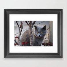 Grey Cat Framed Art Print