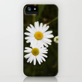 Three Daisies iPhone Case