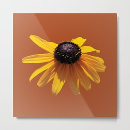 Rudbeckia Orange Metal Print