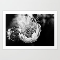 Cactus flower on a California hike Art Print