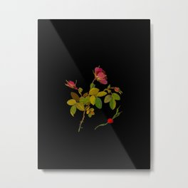 Rosa Fluvialis Mary Delany Vintage Botanical Paper Flower Collage Metal Print