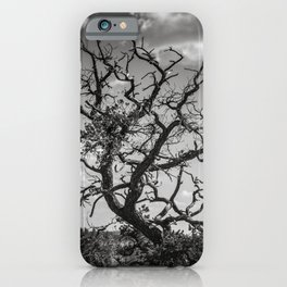 Ancient Tree, Survivor, Alive iPhone Case