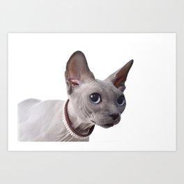 Canadian sphinx cat Art Print