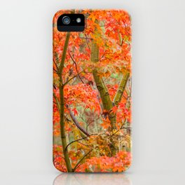 Japanese Maple in autumn iPhone Case
