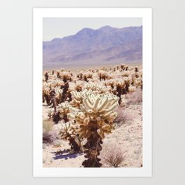 Chollo Cactus Garden - Joshua Tree Art Print