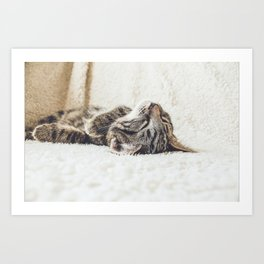 Funny cute cat current mood hipster kawaii kitten animal lover photograph Art Print
