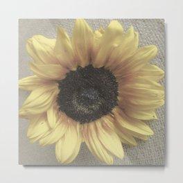Soft Sunflower Metal Print