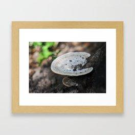 Stomp life Framed Art Print