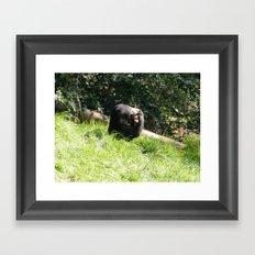 Sun Bear Profile Framed Art Print