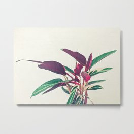 Prayer Plant II Metal Print