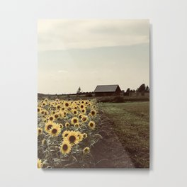 """Sunflower Field on a Farm"" Photography by Willowcatdesigns Metal Print"
