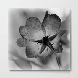 Delicate transparency Metal Print