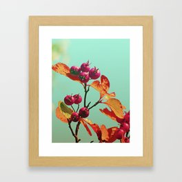 Berrys in sunlight Framed Art Print