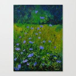Blue chicorees  Canvas Print