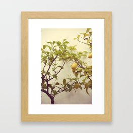 Lemon Tree Framed Art Print