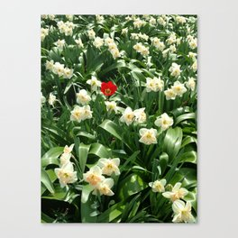 Be a Tulip Canvas Print