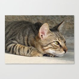 Thoughtful Tabby Cat Canvas Print