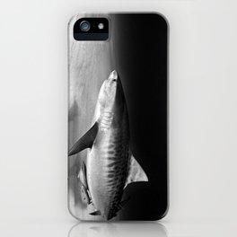 Tiger, tiger iPhone Case