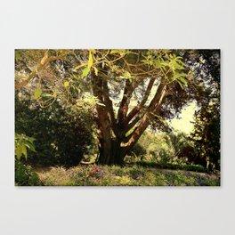 Summer shadow Canvas Print