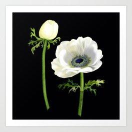 Anemone De Caen - Digital Illustration - Susanne Johnson art 2020 Art Print