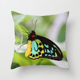 Goliath Birdwing Throw Pillow