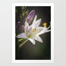 Spotlight on Nature Art Print