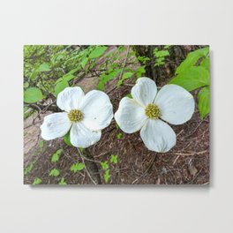 Flowering Dogwood, McKinley Grove, California Metal Print
