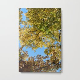 Blue Skies and Autumn Leaves Metal Print