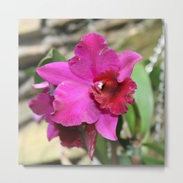 Tropical Flowers Orchids Metal Print