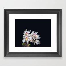 Spray of White Ordchids Framed Art Print